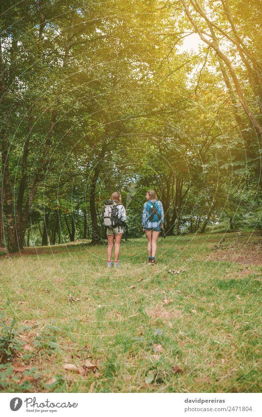 Frau Mensch Natur Ferien & Urlaub & Reisen Sommer Landschaft Baum Freude Wald Berge u. Gebirge Erwachsene Lifestyle Herbst Sport Gras Glück