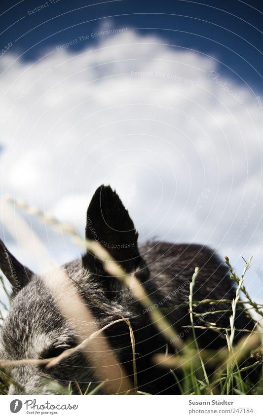 himmel auf Erden. Himmel Natur alt Wolken Tier Gras Bewegung Hund klein Laufsport Sträucher Spaziergang berühren Schönes Wetter Geruch Haustier