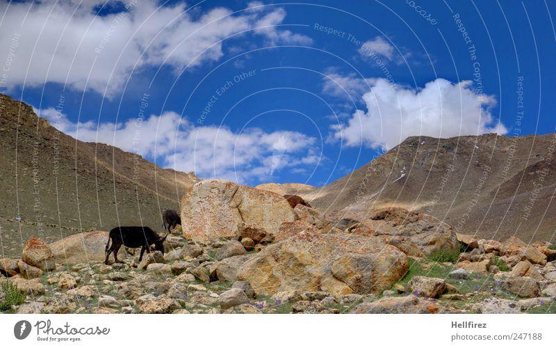 das zauberhafte Ladakh, Land der hohen Pässe Himmel Natur Pflanze Sommer Ferne Tier Berge u. Gebirge Landschaft Umwelt Wege & Pfade Erde