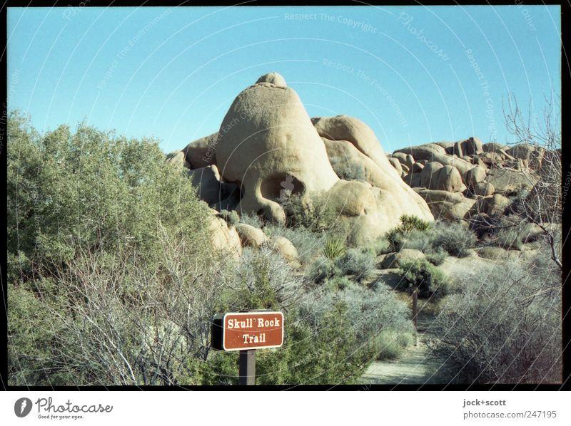 Skull Rock Natur Farbe Tier Wege & Pfade natürlich außergewöhnlich Stein Felsen Angst authentisch Sträucher fantastisch Hinweisschild Fotografie einzigartig