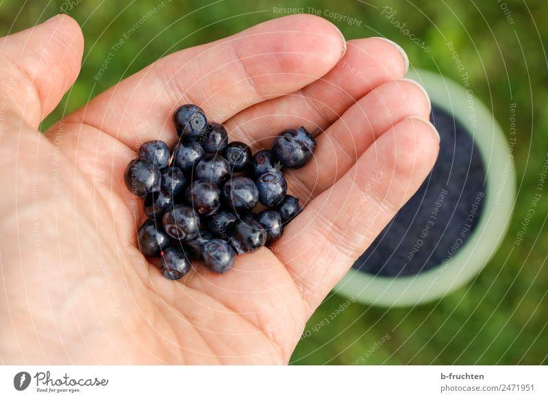 Wild-Heidelbeeren Lebensmittel Frucht Bioprodukte Hand Finger Garten Wiese Wald Essen festhalten frisch Gesundheit blau genießen Blaubeeren Beeren pflücken