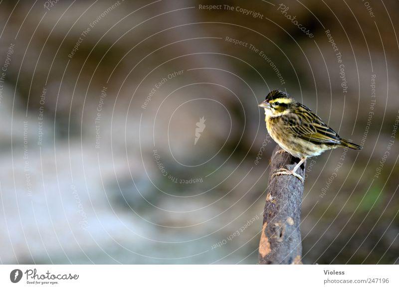 piep - kleiner vogel Tier klein Vogel Flügel niedlich Federvieh