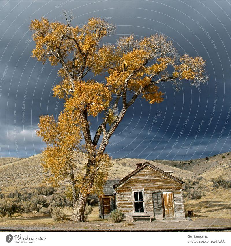 Geisterstadt Baum Blatt Einsamkeit gelb Herbst Tod Traurigkeit Farbstoff USA Hütte Amerika Geister u. Gespenster Baumkrone Landschaft Ödland Gewitterwolken