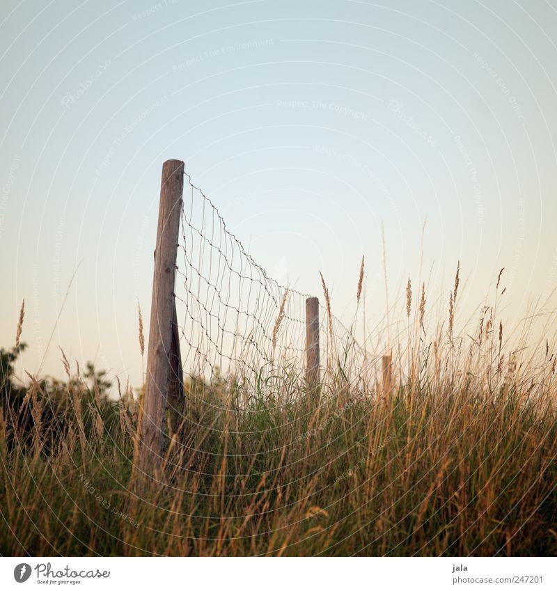 zaun Himmel Natur grün blau Pflanze Landschaft Gras Umwelt braun natürlich Sträucher Zaun Zaunpfahl