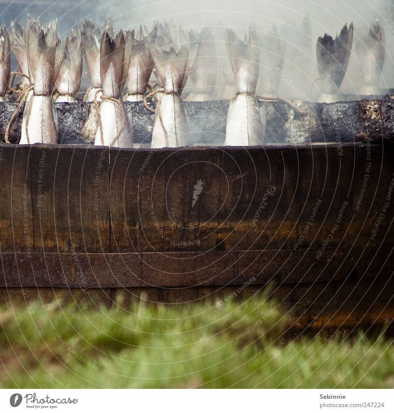 Räucherfisch für alle! :D grün Tier Gras Holz grau braun Wildtier Lebensmittel Brand Ernährung Tiergruppe Fisch Schnur Rauch lecker