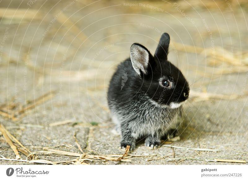Meine Katze Himmel Tier schwarz Tierjunges braun Freundschaft niedlich weich Warmherzigkeit Schutz Fell Haustier Hase & Kaninchen Geborgenheit kuschlig Nutztier