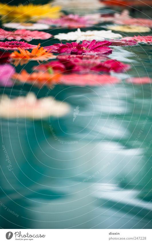 Floating Flowers Pt.2 Natur Wasser Pflanze Blume ruhig Erholung Blüte Zufriedenheit Schwimmen & Baden natürlich nass Wellness Blühend Flüssigkeit Lebensfreude