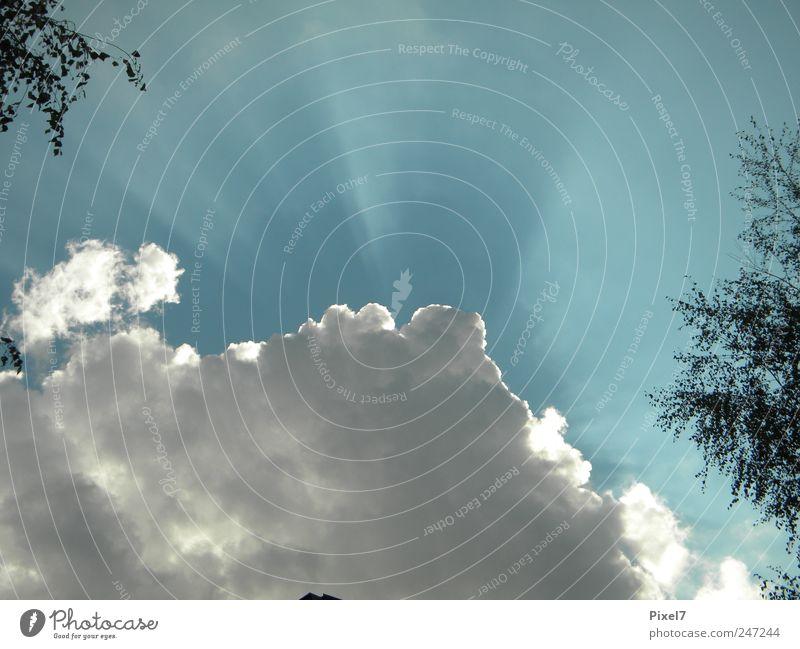 Wolkenlichtspiel Himmel Baum Sommer Schönes Wetter