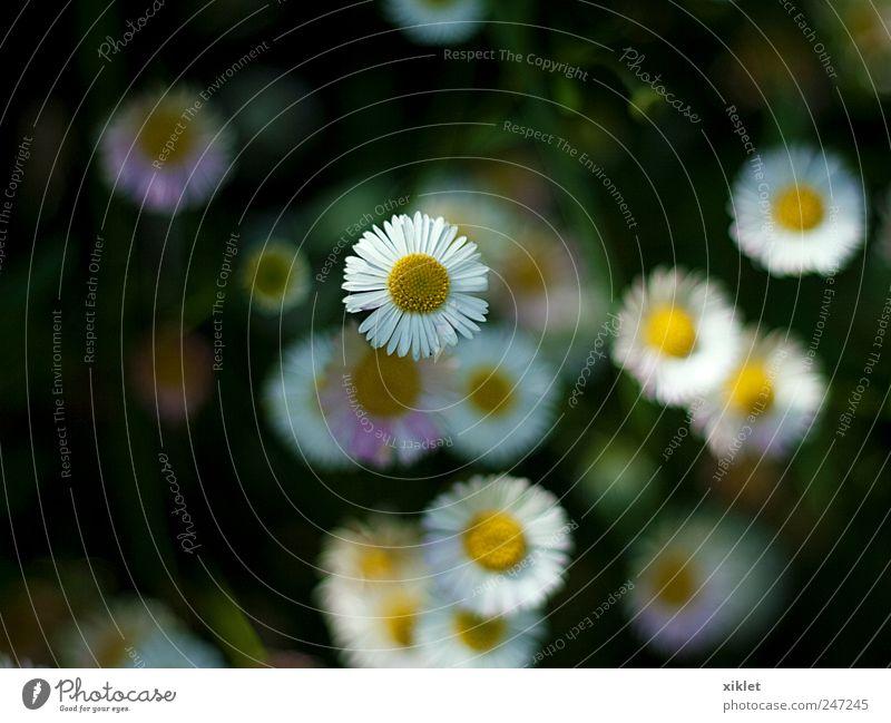 weiß grün Blume gelb Farbe Garten Frühling frisch einfach Tau Geburt Blütenblatt Rispenblüte