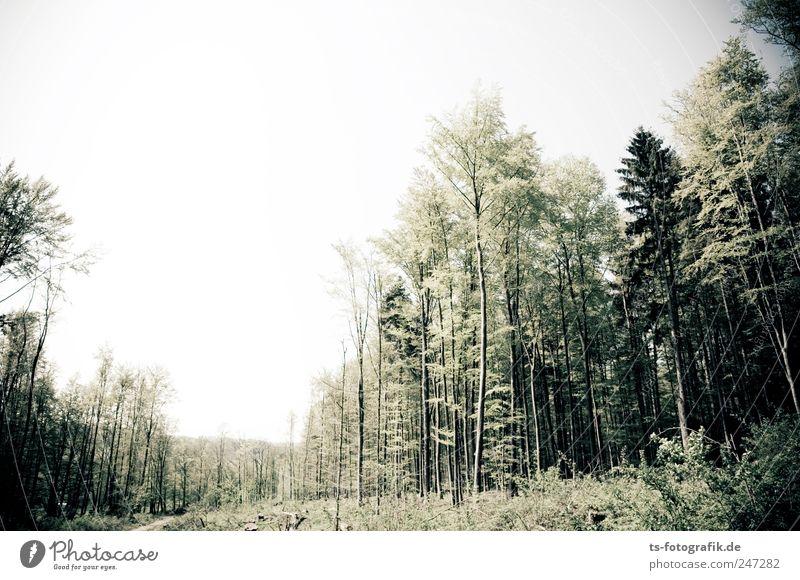 Sturmschneise Umwelt Natur Landschaft Pflanze Himmel Horizont Sommer Klima Baum Wald natürlich grün Mischwald Vogelsberg Hessen Forstwirtschaft Sturmschaden