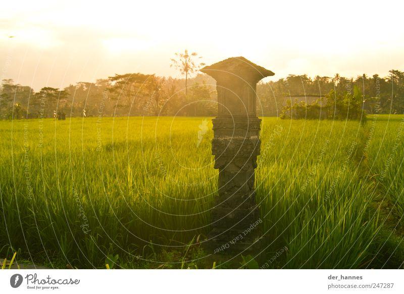 BALI Natur Sommer Pflanze Freude Landschaft Umwelt Gras Religion & Glaube Glück Stein Feld Klima Wachstum Schönes Wetter Kultur heiß