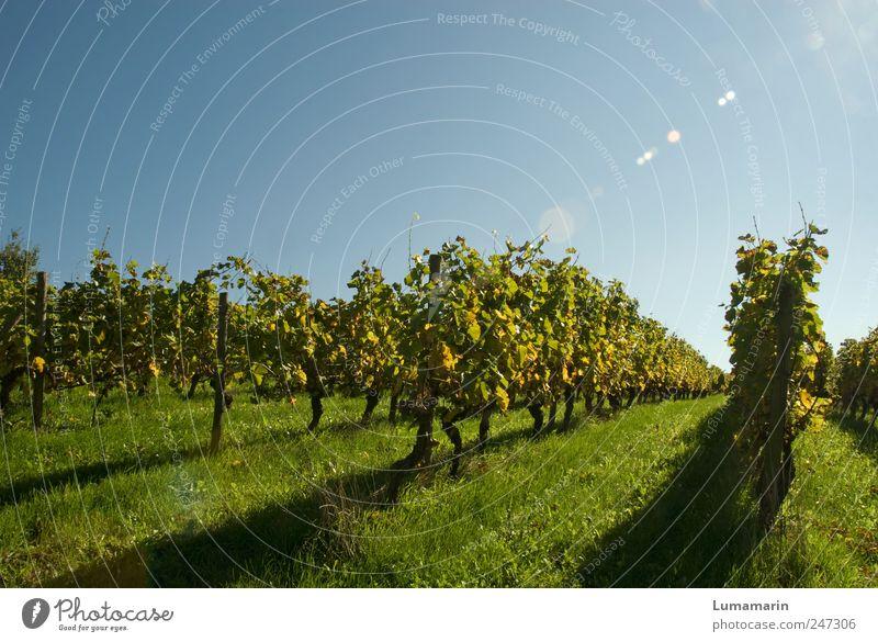 Leselandschaft Umwelt Landschaft Wolkenloser Himmel Herbst Schönes Wetter Pflanze Sträucher Nutzpflanze Feld lang natürlich Sauberkeit schön Stimmung