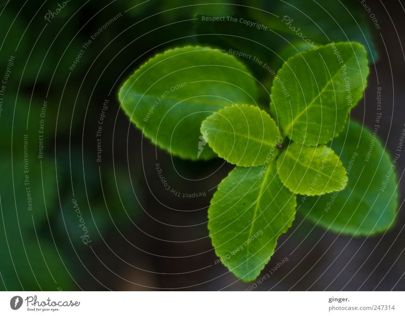 Einmal um sich selbst gedreht... Natur grün Pflanze Blatt Garten Umwelt drehen Grünpflanze gegenüber Pflanzenteile