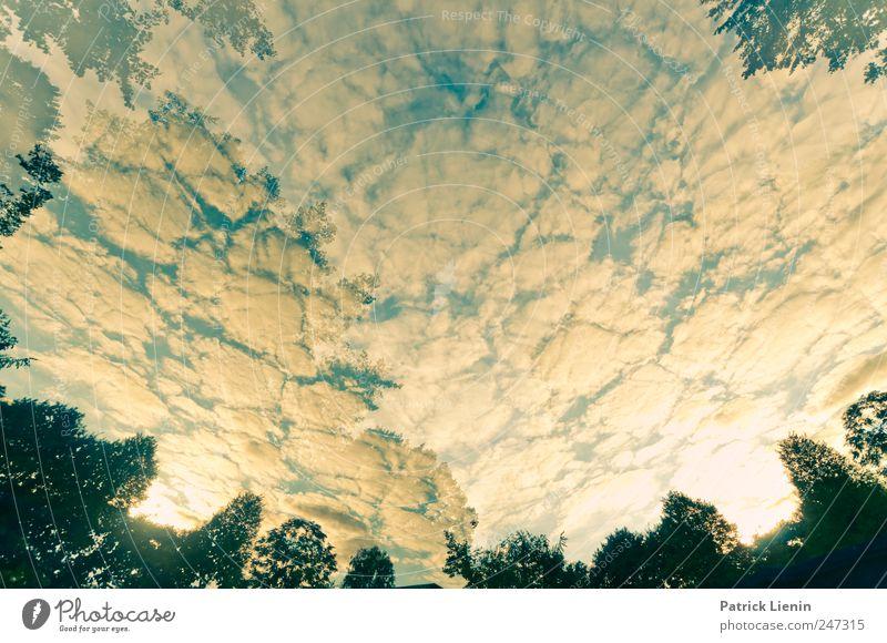 sky is open Himmel Natur Baum Pflanze Sommer Ferien & Urlaub & Reisen Wolken Ferne gelb Umwelt Freiheit Landschaft Luft Wetter Zufriedenheit Horizont