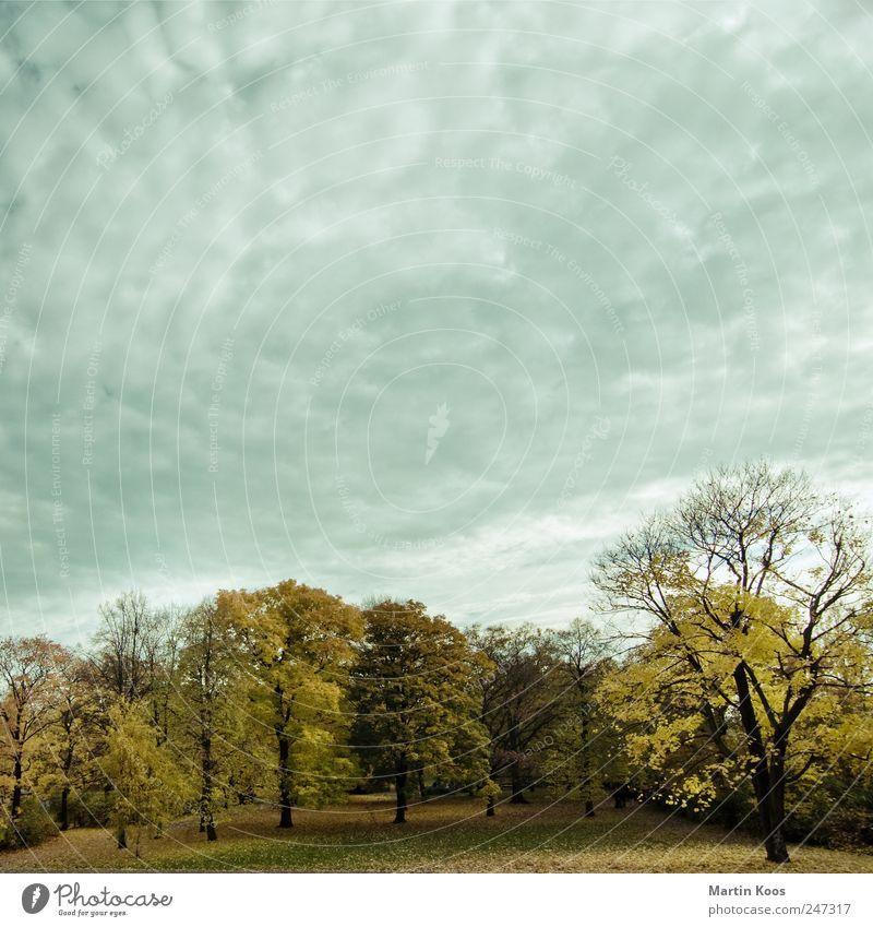 Herbst ist auch schön Himmel Natur Baum Pflanze Blatt Wolken Wald Farbe Landschaft Park Wetter Zeit Jahreszeiten Schönes Wetter schlechtes Wetter