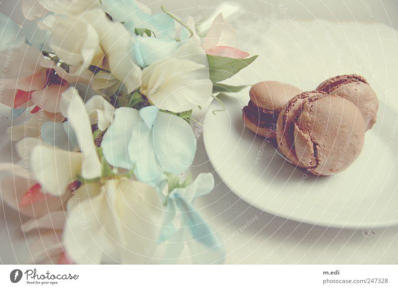 Fleurs et macarons III schön Blume süß einzigartig Süßwaren Schokolade