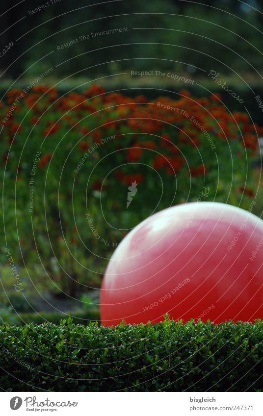 Ruhepol grün rot ruhig Erholung Garten Park Zufriedenheit Ball Kugel Gelassenheit Meditation Wohlgefühl harmonisch Hecke