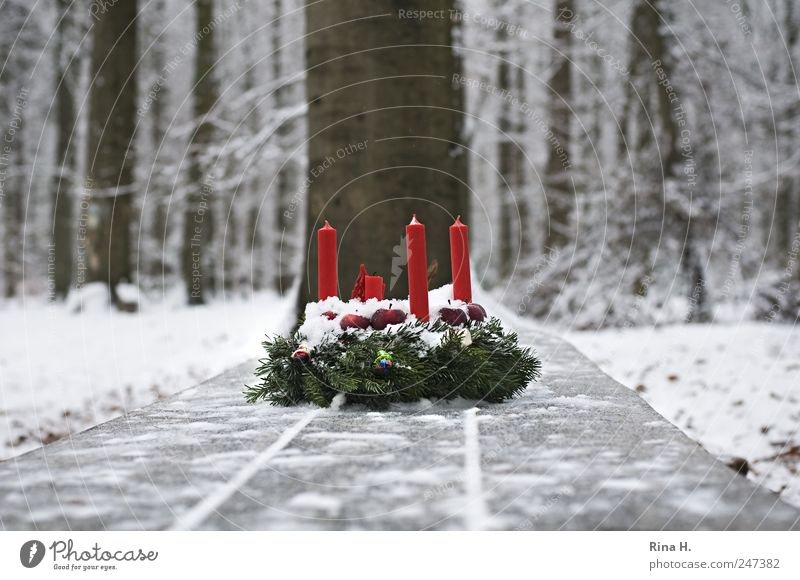 1. Advent bei den Sieben Zwergen Natur Landschaft Winter Eis Frost Schnee Baum Wald Kerze authentisch kalt natürlich rot weiß Gefühle Vorfreude