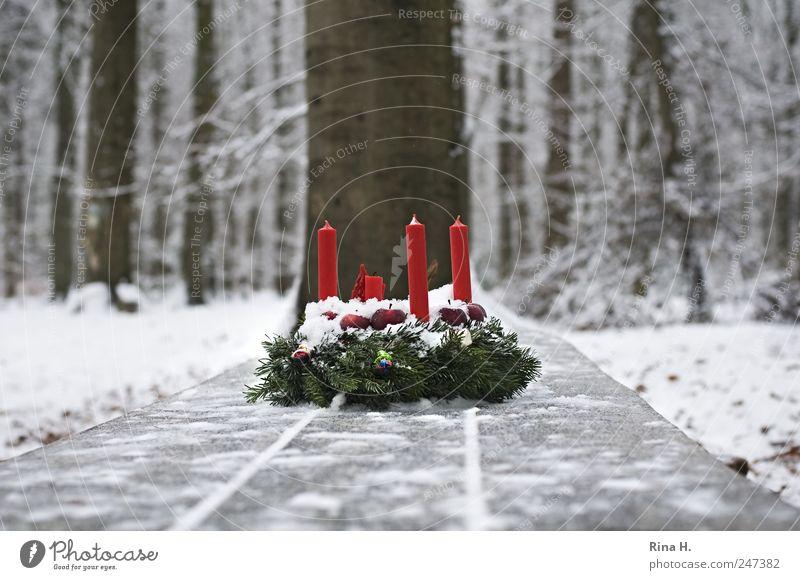 1. Advent bei den Sieben Zwergen Natur Weihnachten & Advent weiß Baum rot Winter Wald kalt Schnee Gefühle Landschaft Religion & Glaube Eis natürlich Frost Kerze