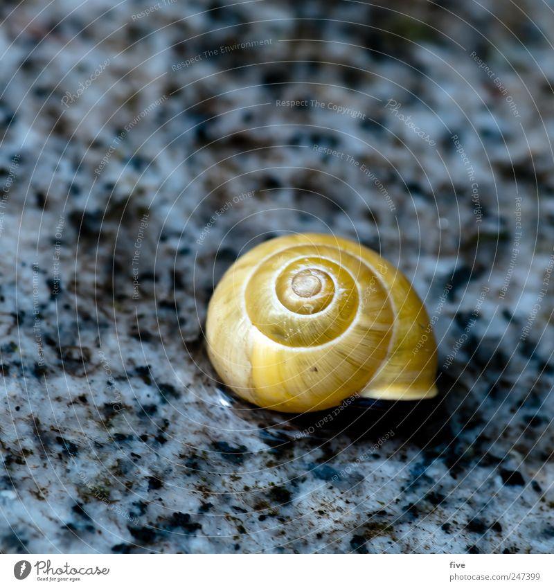 häuschen Natur Garten Tier Schnecke schlafen Schneckenhaus Bodenbelag Bodenplatten Kreis Farbfoto Außenaufnahme Nahaufnahme Detailaufnahme Makroaufnahme
