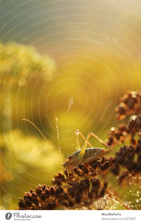 grün Tier gelb grau braun klein gold frei frisch authentisch Wildtier Tiergesicht