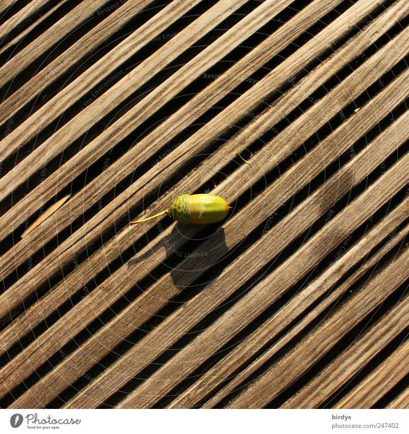 Eichel Herbst liegen einfach braun grün Holzfußboden Diagonale Linien diagonal parallel Mitte Eicheln 1 Fuge Quadrat Frucht Baumfrucht reif Farbfoto