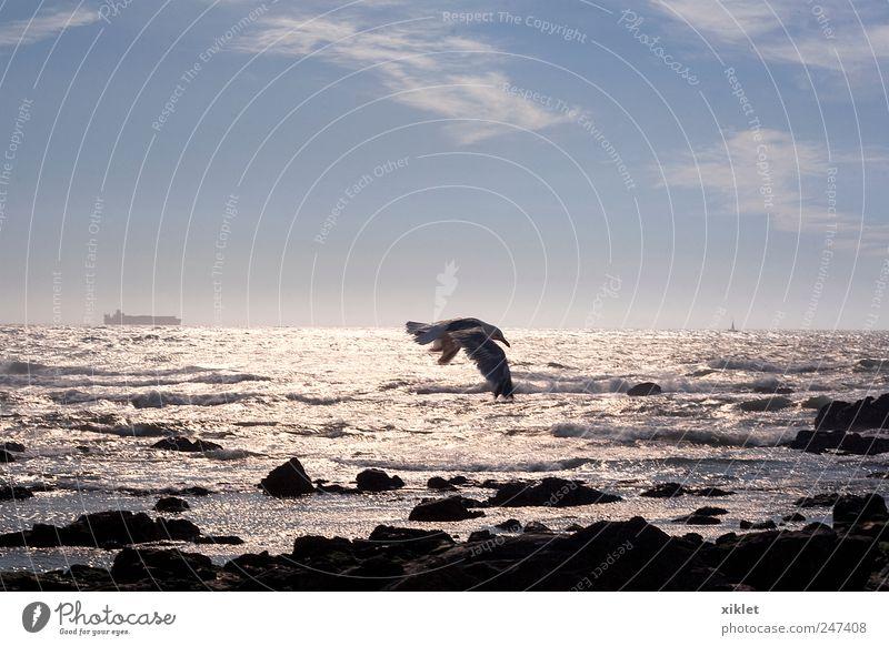 weiß Strand Meer Freiheit Bewegung Sand Küste Wellen Wind fliegen Energie Flügel Spiegel Etage silber Gezeiten