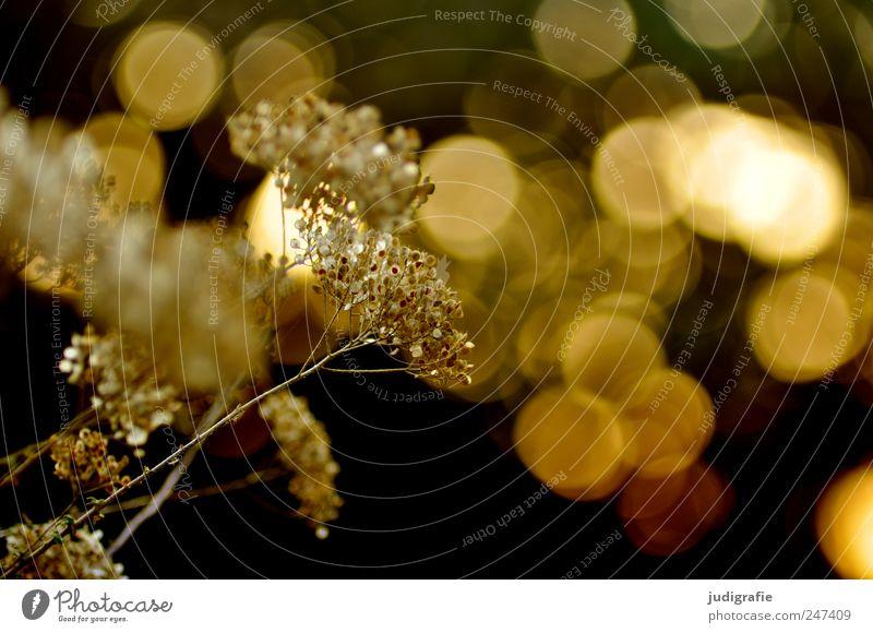 Sommer Natur Pflanze Wiese Gras Blüte Umwelt Stimmung glänzend gold Wachstum natürlich leuchten