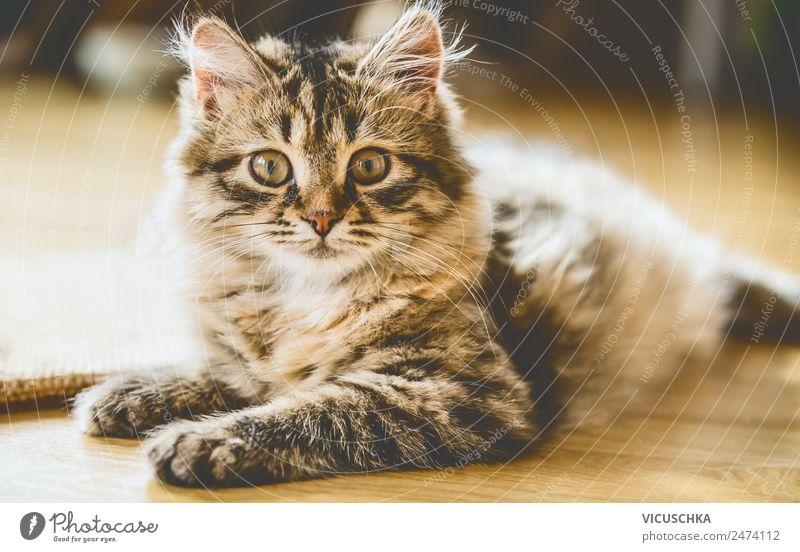 Sibirisches Kätzchen Lifestyle Freude Häusliches Leben Tier Haustier Katze 1 Gefühle Freundschaft Katzenbaby weich Sibirische Katze Porträt liegen Boden