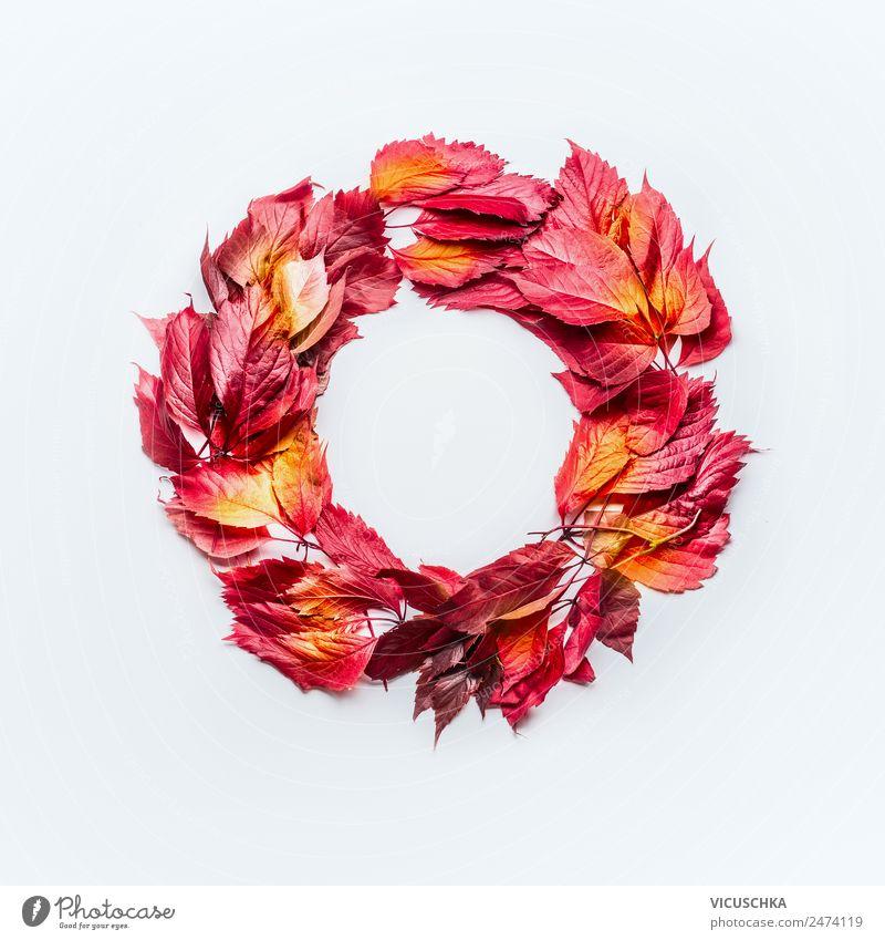 Kranz aus roten Herbstblätter auf weiß Stil Design Erntedankfest Natur Blatt Dekoration & Verzierung Ornament gelb Composing Hintergrundbild Symbole & Metaphern