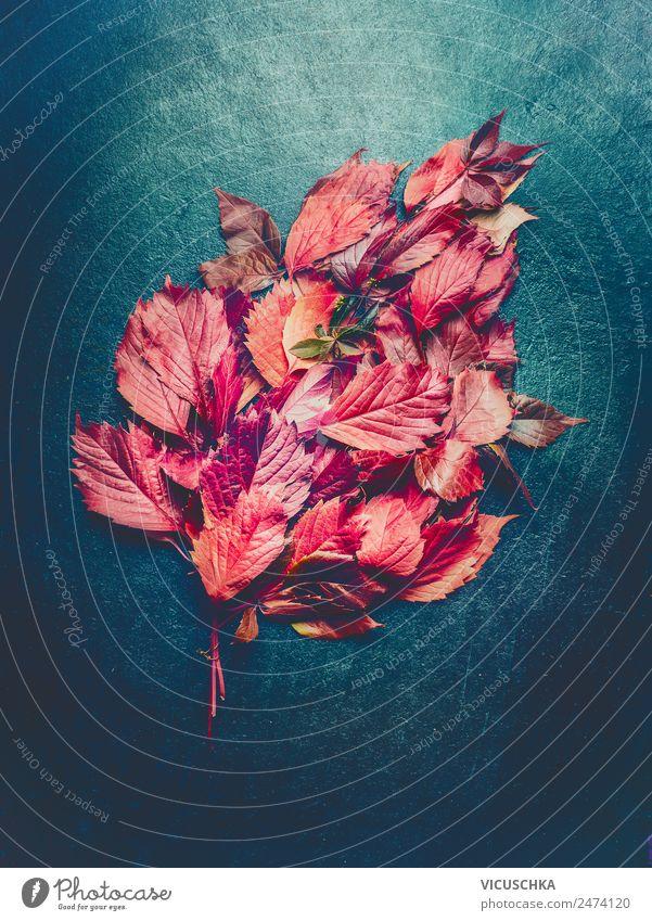 Rotes Hebstlaub Composing auf dunklem Hintergrund Stil Design Natur Pflanze Herbst Blatt Garten Dekoration & Verzierung Blumenstrauß Ornament retro rot schwarz