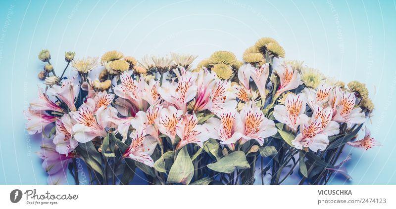 Schöne Blumen auf blauem Hintergrund Stil Design Sommer Garten Natur Pflanze Frühling Blatt Blüte Dekoration & Verzierung Blumenstrauß rosa Symbole & Metaphern