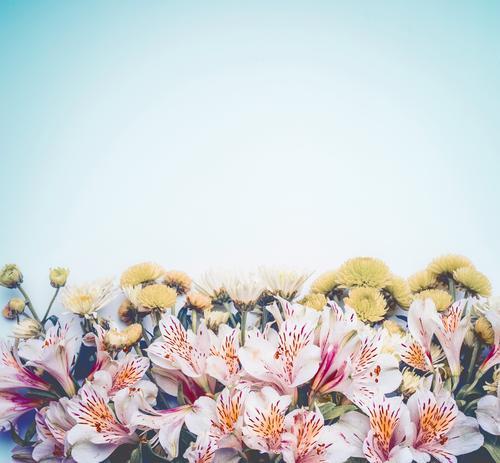 Schöner Hintergrund mit BLümen on hellblau Stil Design schön Sommer Natur Pflanze Frühling Blume Blatt Blüte Dekoration & Verzierung Blumenstrauß Liebe rosa