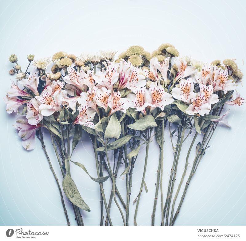 Blumen auf pastel blau Stil Design Leben Sommer Garten Dekoration & Verzierung Feste & Feiern Natur Pflanze Blatt Blüte Liebe rosa Hintergrundbild Entwurf