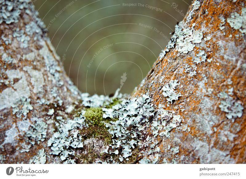 V-Ausschnitt Natur Pflanze Baum Flechten Moos natürlich wild blau braun grün Baumrinde belegt bewohnt Farbfoto Außenaufnahme Strukturen & Formen Menschenleer