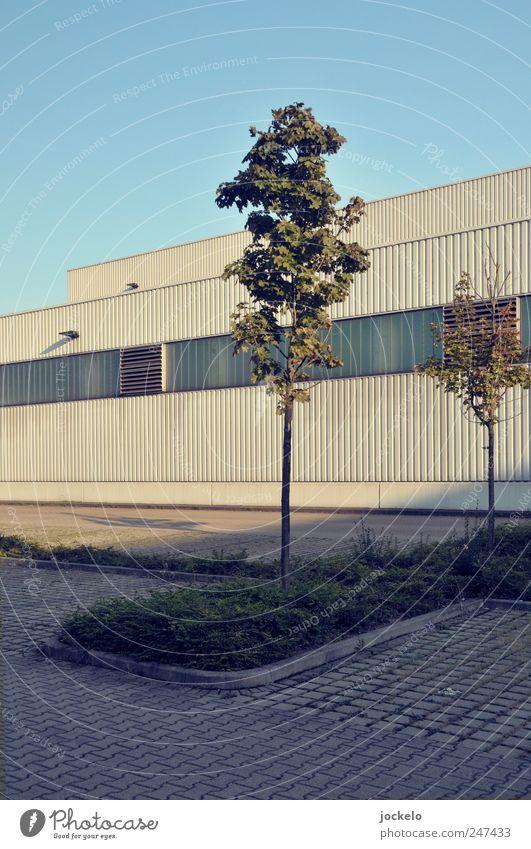 Mein Freund der Baum Stuttgart Industrieanlage Bauwerk blau Einsamkeit Parkplatz Farbfoto Außenaufnahme Tag Weitwinkel