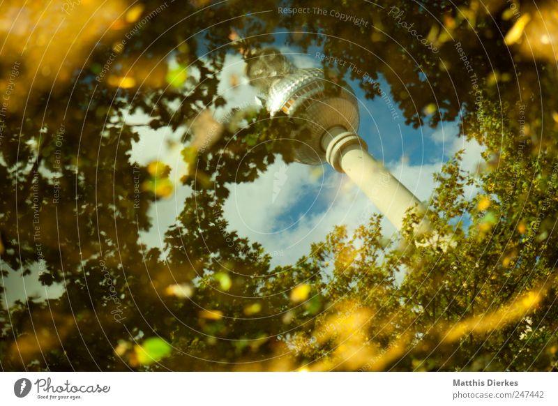 Er. Baum Wald Berlin Wahrzeichen Stadtzentrum Märchen Surrealismus Berlin-Mitte Pfütze Hauptstadt Sehenswürdigkeit Berliner Fernsehturm Fernsehturm Alexanderplatz Waldlichtung Wasser