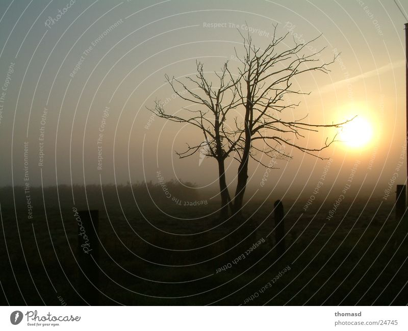 Sonnenaufgang im Nebel Baum Wiese