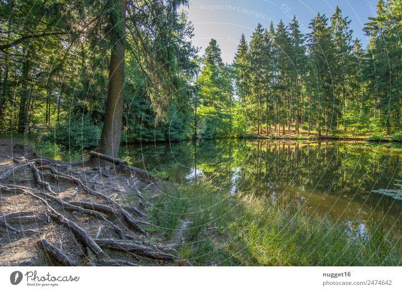 Idyll am See I Umwelt Natur Landschaft Pflanze Erde Sand Wasser Himmel Wolkenloser Himmel Sonne Sonnenlicht Frühling Sommer Herbst Klima Schönes Wetter Baum