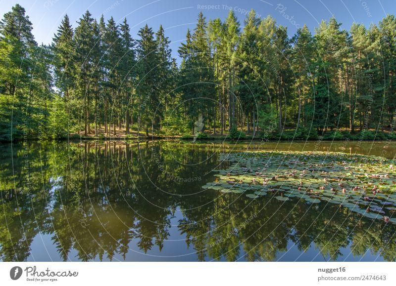 Idyll am See II Umwelt Natur Landschaft Pflanze Erde Wasser Himmel Wolkenloser Himmel Sonnenlicht Frühling Sommer Herbst Klima Wetter Schönes Wetter Baum Gras