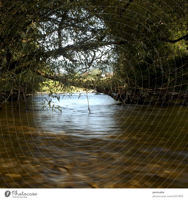 wassertor Himmel Natur Wasser Sommer ruhig Wald Landschaft träumen Horizont Fluss Sehnsucht Tor Flussufer Schönes Wetter