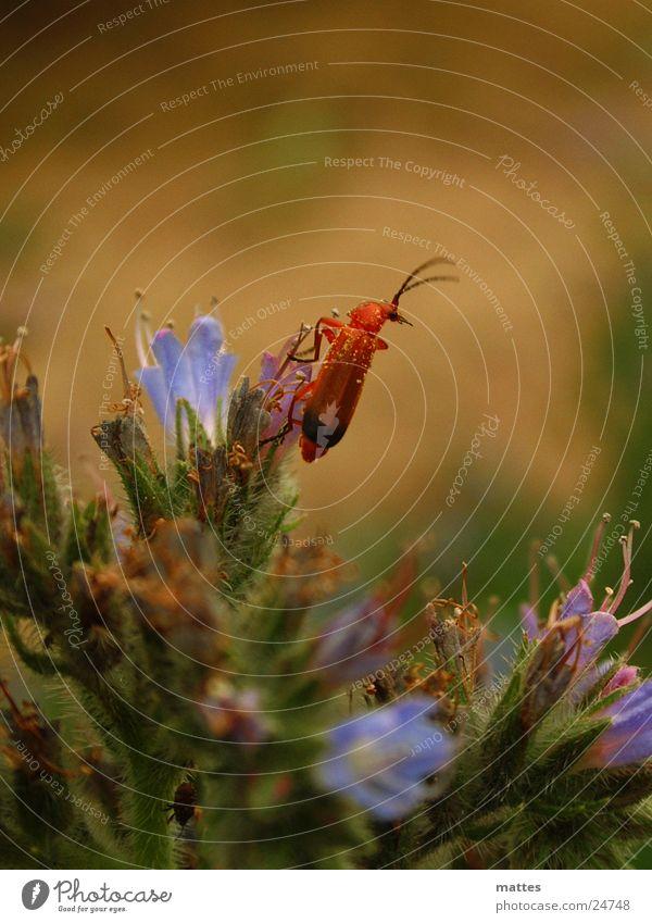 käferlein Blume Tier klein Verkehr Käfer