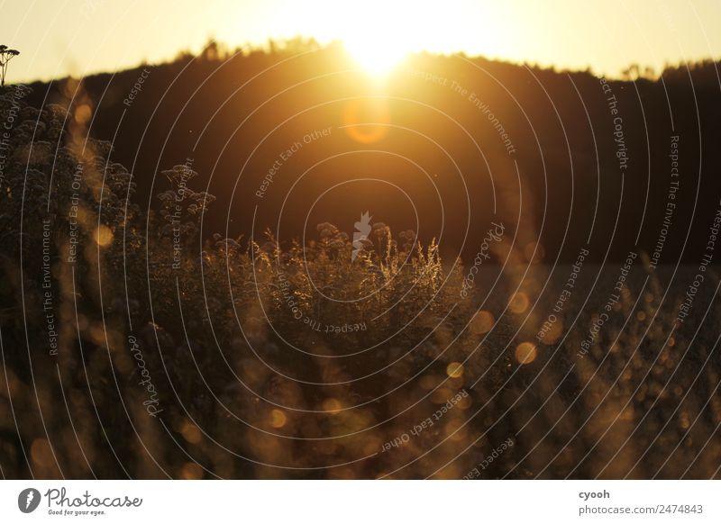 Die letzten Lichtstrahlen Natur Landschaft Einsamkeit ruhig Ferne dunkel Wärme gelb Wiese Zeit Freiheit Stimmung hell Horizont träumen Feld