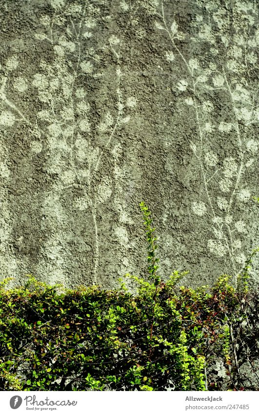 Zeichen der Zeit Pflanze Wand dreckig Sträucher Vergänglichkeit Erinnerung Efeu Grünpflanze Abdruck