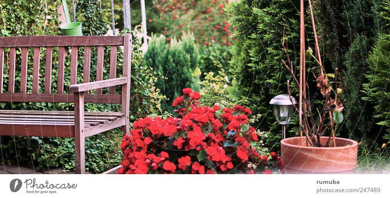 Terrassen-Idylle Natur grün Pflanze rot Sommer Erholung Umwelt Garten Blüte braun Freizeit & Hobby Sträucher Bank Häusliches Leben genießen Schönes Wetter
