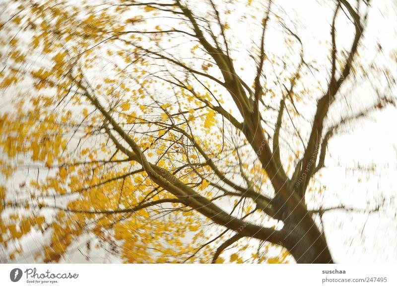 baum (333) Umwelt Natur Luft Himmel Gewitterwolken Herbst Klima Klimawandel Wetter Wind Sturm Baum Park leuchten gelb gold Kraft Wachstum Wandel & Veränderung