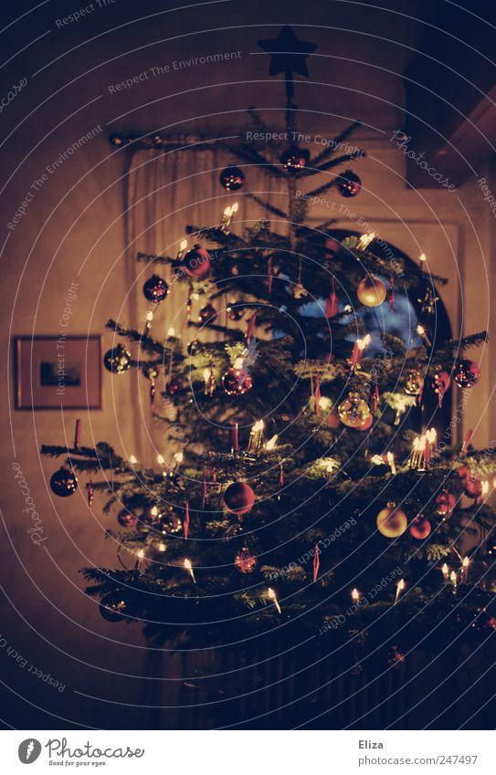 Ooooh duuuu frööööhlicheeee... Weihnachten & Advent Feste & Feiern Zusammensein Dekoration & Verzierung Warmherzigkeit Weihnachtsbaum Wohnzimmer Tanne