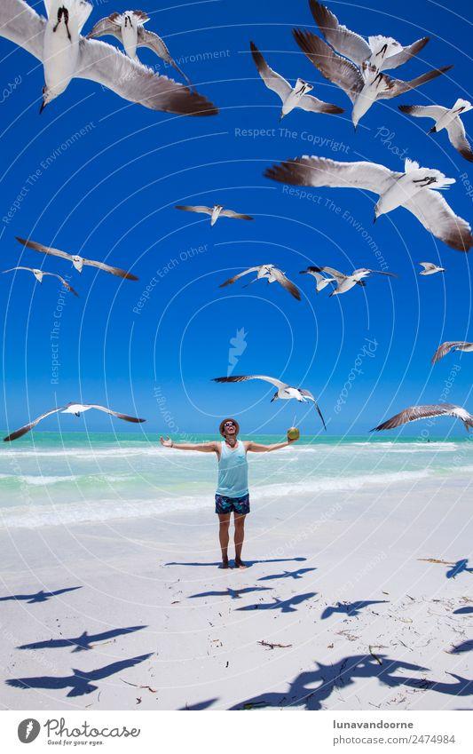 Mensch Natur Jugendliche Mann Sommer Sonne Strand 18-30 Jahre Erwachsene Lifestyle Glück Freiheit Vogel Wasserfahrzeug Freizeit & Hobby träumen