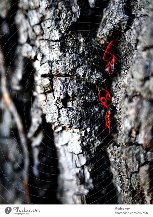 Das rote i-Tüpfelchen Natur Pflanze Sommer Baum Park Tier Wildtier Käfer 4 Tiergruppe natürlich grau schwarz weiß Baumrinde Feuerwanze Schwarzweißfoto krabbeln