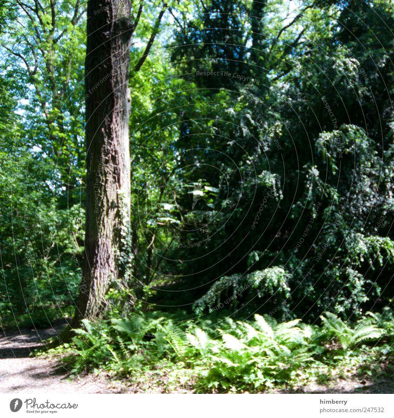 nursery garden Himmel Natur Pflanze Sommer Baum Erholung Blatt Landschaft ruhig Wald Umwelt Berge u. Gebirge Frühling Garten Park Erde